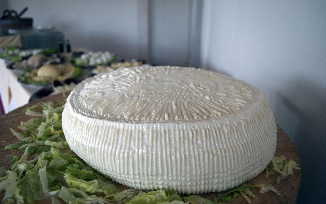 Campotenese – Gli allevamenti e i formaggi