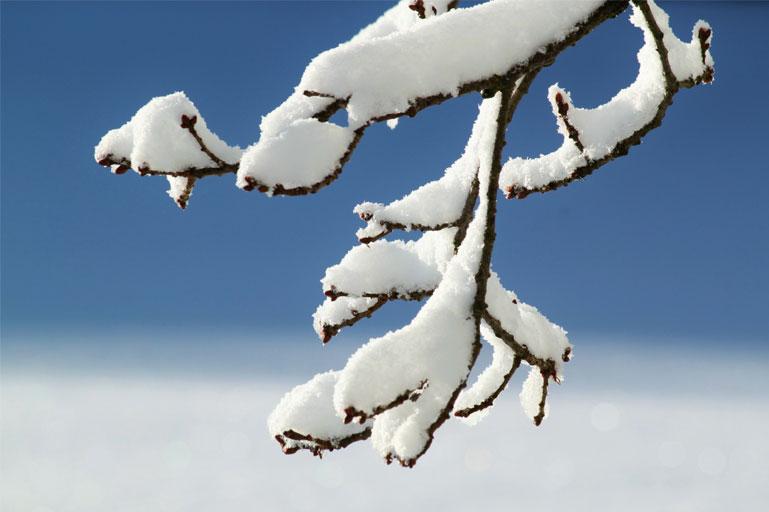 Conservando la neve
