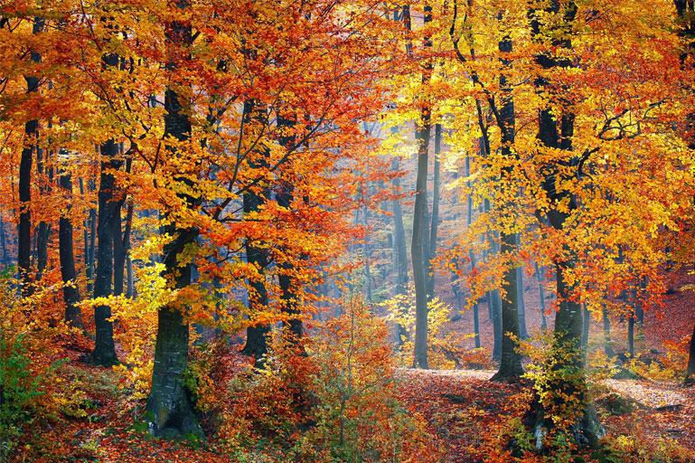 Proverbi sul bosco
