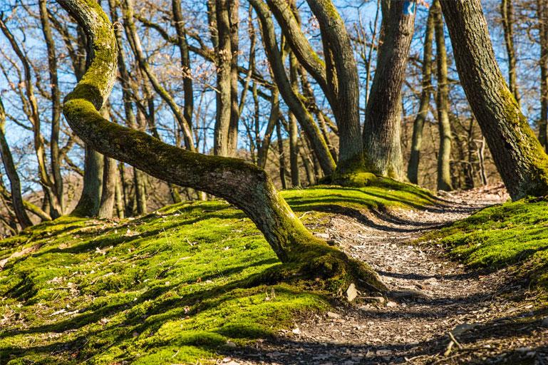 Poesie del bosco
